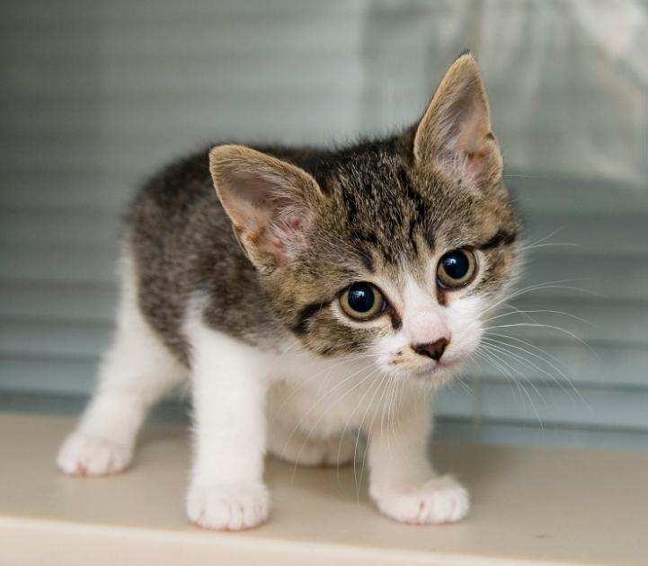 Hội chứng mèo kêu